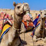 Indie, Jaisalmer - pouštní safari